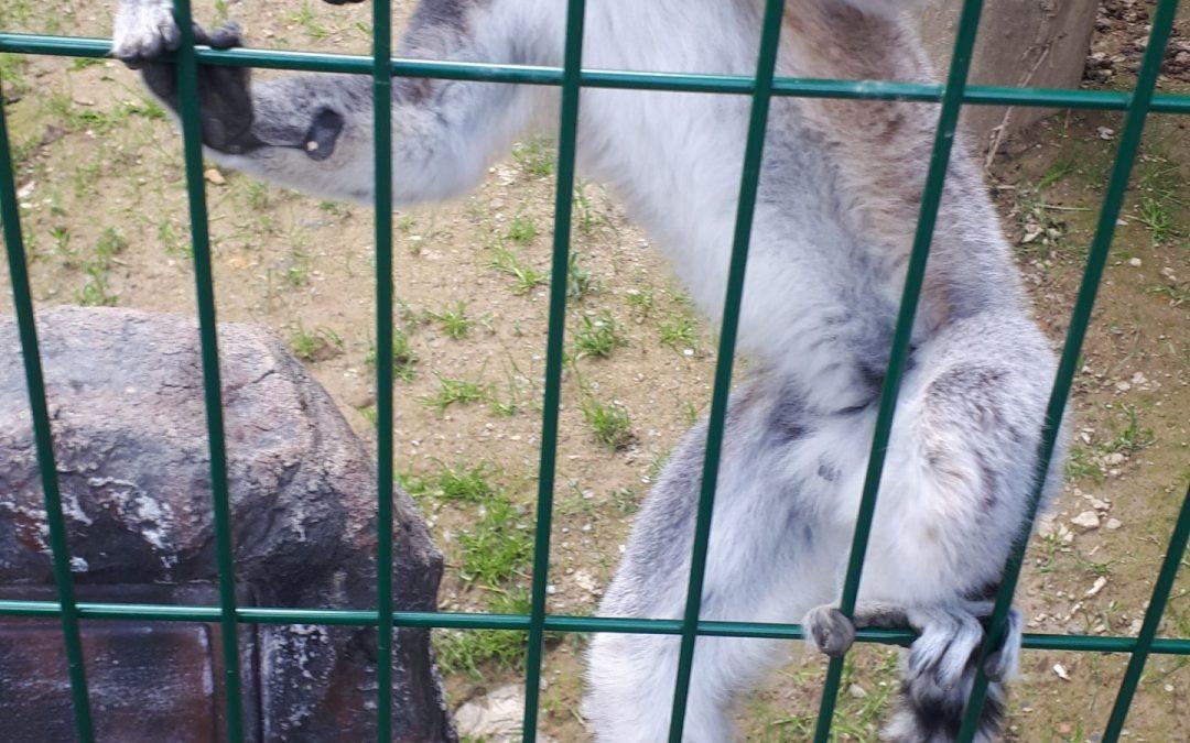 Obisk Sikalu zoo v Radencih